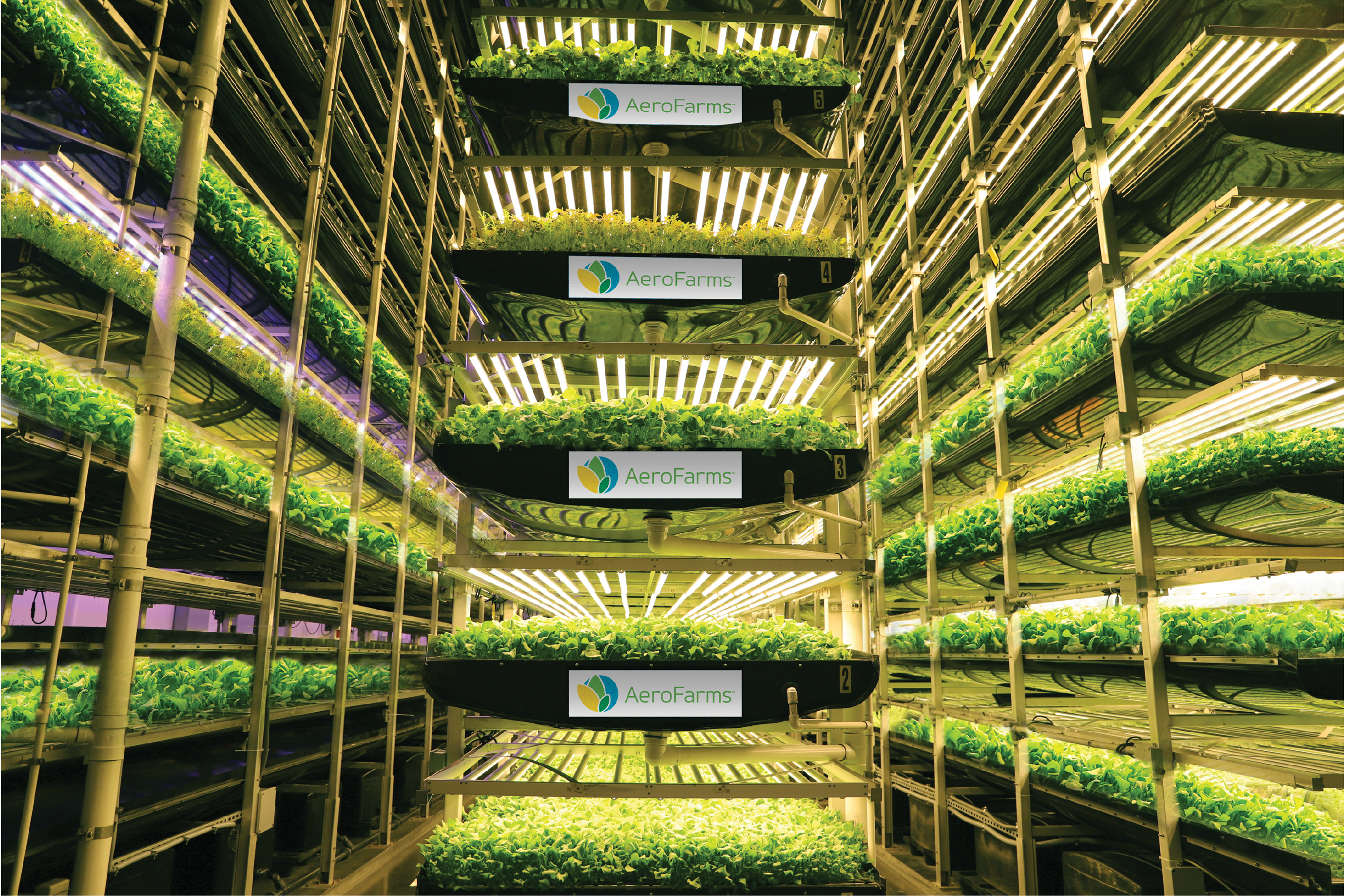 Vertical Farming Could Help Us Build A More Equitable Food System